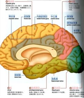 脳2.jpg